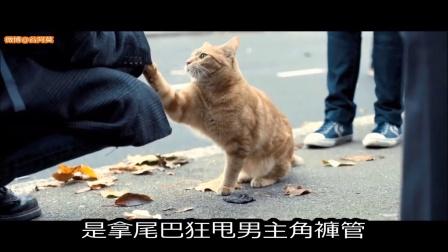 谷阿莫说故事 第二季:5分钟看完2016因为猫改变人生的电影《流浪猫鲍勃》210