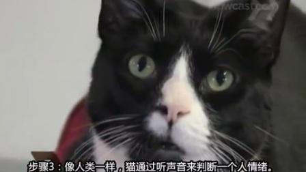 【百姓网】该怎么和猫说话_养猫小知识视频翻译