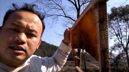 中蜂春繁经验,查蜂顺便把咬的老脾再割掉。