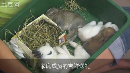 这农历新年请救救兔子