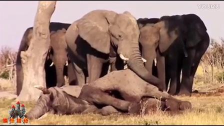 非洲象天敌一览表