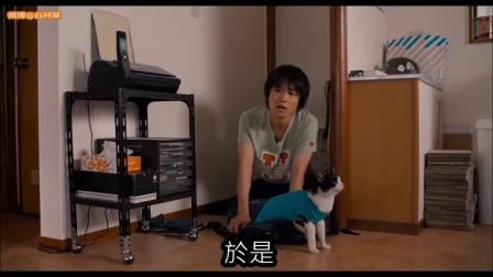 【谷阿莫】5分鐘看完2016結不結紮的電影《为什么猫都叫不来》