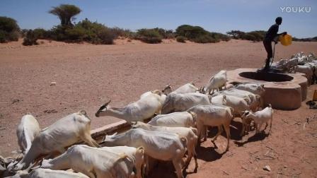 旱情加剧致牲畜死亡,索马里民众面临生存威胁