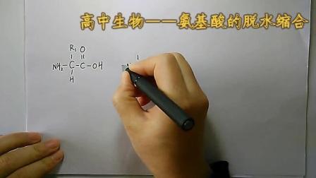 《氨基酸的脫水縮合》高一生物-合陽中學-樊曉麗-陜西省首屆微課大賽