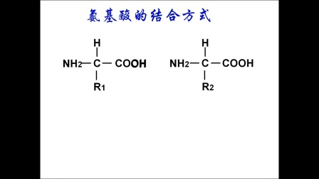 《氨基酸分子結構及其脫水縮合》高一生物-子洲縣三中-郭瑜瓊-陜西省首屆微課大賽