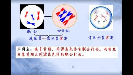 《減數分裂過程中染色體變化》高一生物-安市五環中學-祁鐵軍-陜西省首屆微課大賽