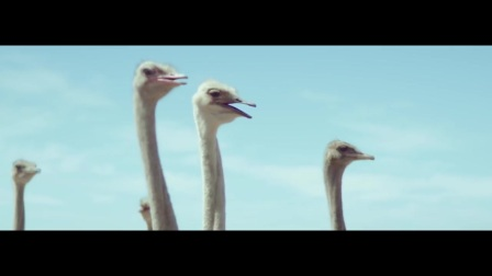 Samsung Official TVC- Ostrich.mp4