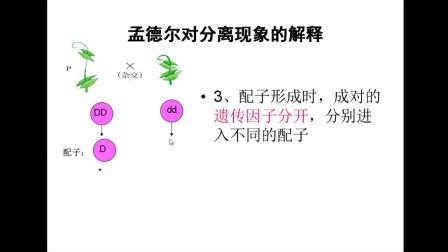 《孟德爾對分離現象的解釋》高一生物-榆林高新區完全中學-李杰-陜西省首屆微課大賽