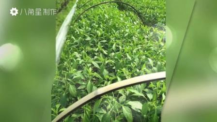 qq农场 开心农场 种菜游戏 种菜基地 种菜代理注册