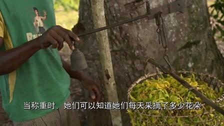【Co-Impact Sourcing】依兰依兰 Ylang Ylang-CN+