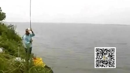 假鱼饵怎么钓鲤鱼