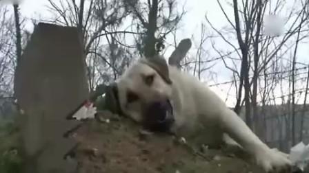 主人寻找失踪狗狗 但看到它时彻底泪崩了