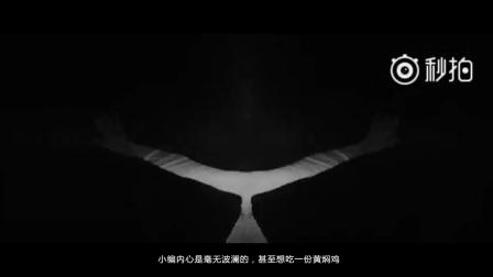 麻辣酷评·第138期-老罗重新定义春天 ZUK挥手说再见