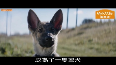 【谷阿莫】5分鐘看完2017鑽你裙底的電影《一条狗的使命》