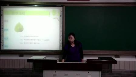 小学数学人教五上《树叶的面积》说课 北京邓晶(北京市首届中小学青年教师教学说课大赛)