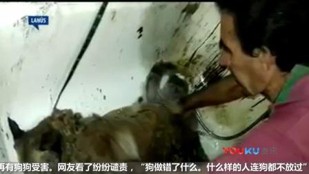 狗狗被人恶意泼柏油不敢动 如果不爱请别伤害!