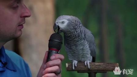 口技惊人的鹦鹉
