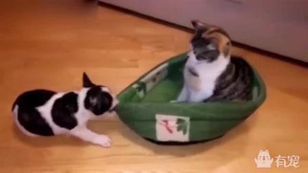 猫狗的抢窝大战