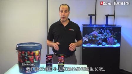 红海-海水鱼饲养指南