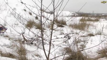 雷虎凯撒大脚车雪地暴力展示