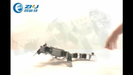 智能佳-百乐系列加强版-蜥蜴演示视频