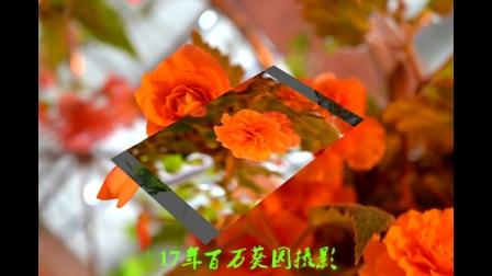 流花湖,百万葵园.风景MP4