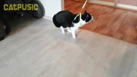 猫咪死活不愿意出门,主人拿它毫无办法