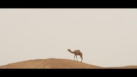 英国马球日迪拜 2017