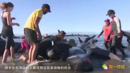 远看以为是搁浅鲸鱼, 走近一看, 所有人都沉默了!