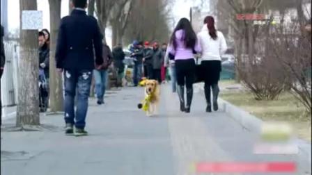 狗狗来到妈妈墓前向妈妈告别 去寻找主人艾亮