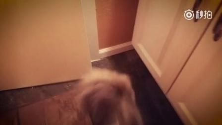 一网友说他家猫每天早上都要做一件奇怪的事情