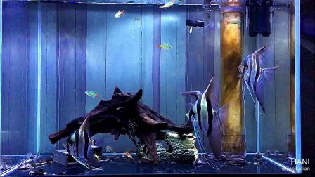 埃及 鱼缸 鼠鱼 异型 沉木