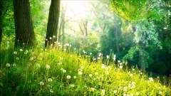 大自然的声音 森 夏 野鳥 水音  安靜 放鬆 禪修