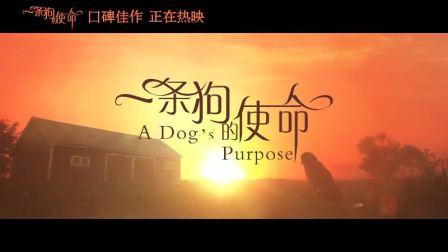 《一条狗的使命》上映一周票房逆袭破2亿 萌宠贝利片段曝光