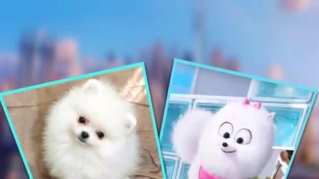 动漫狗狗来到现实世界,搞笑动物界,动漫现实