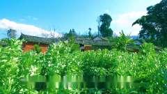 中国有那些风景姚青春老家云南大自然风光山水
