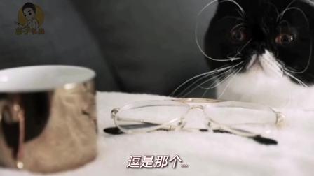 重庆方言搞笑动物配音,让动物们来告诉你什么