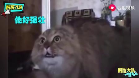 搞笑动物配音:猫咪去算命,啥时候才能脱单?