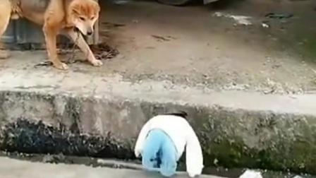 鸡中战斗机 斗战胜鸡博资座驾式履带旋耕机微耕机开g机搞笑视频