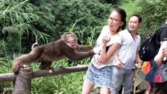 【每日一囧】被妈妈逼着去和猴子拍照后…这是