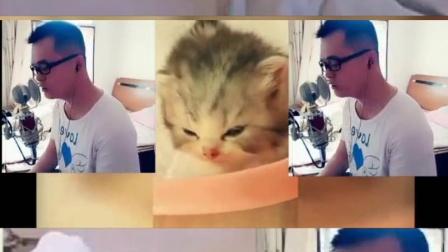舒小刚原创音乐《流浪猫》