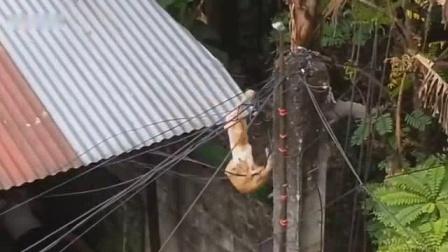我在惊天地泣鬼神! 5大猫跟猫打架搞笑视频截了