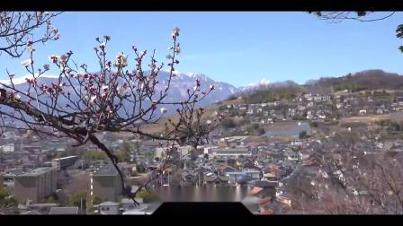 s245 2K画质大树鲜花花瓣飘落樱花雨舞台LED晚会背