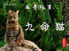 离奇故事《九命猫》01