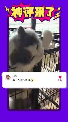 #搞笑# 人间不值得留恋,莫拦我#刘恺威小糯米合