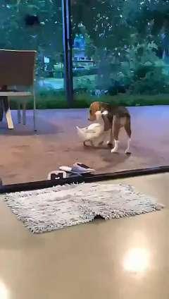 原来动物也会拥抱,真是一对好朋友鸭!!!