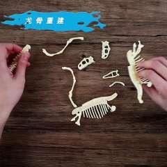 美乐 儿童化石挖掘恐龙考古 霸王龙骨架手工益智