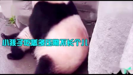 搞笑动物:熊猫妈妈爬树从上跌落,竟拿孩子当
