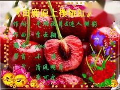 白鹿原上樱桃红(音乐迷)