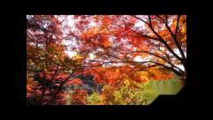 音乐风光片 秋天的感觉